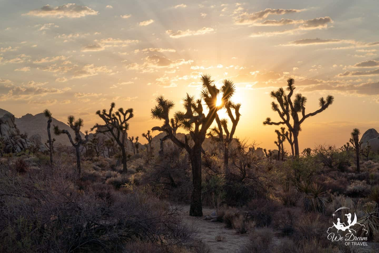 Capturing the golden light of sunset as it passes through the Joshua Trees.