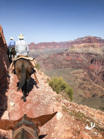 Donkeys descending the North Kaibab Trail to the bottom of the Grand Canyon.