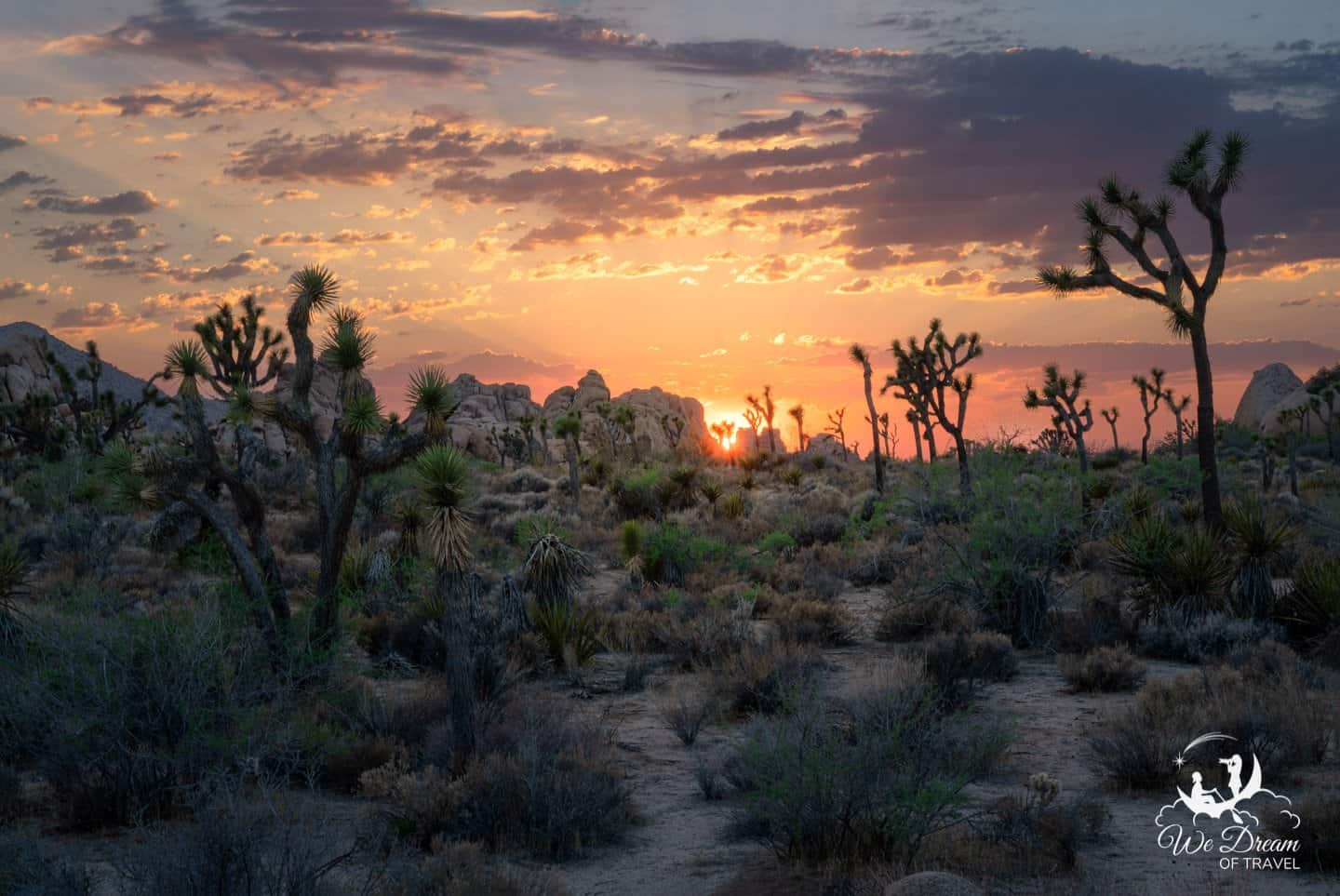 A sunset picture of Hidden Valley. the best and most popular spot for sunset in Joshua Tree NP.