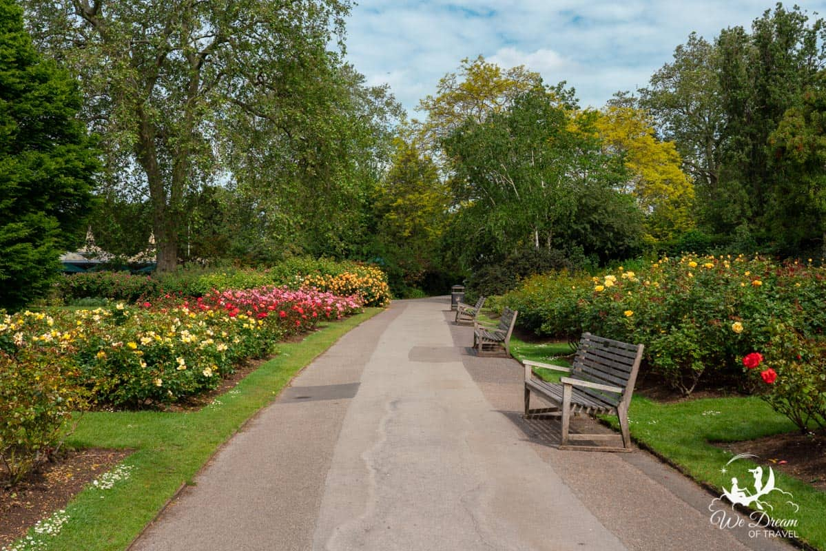 Queens Mary's Rose Garden in Regent's Park London