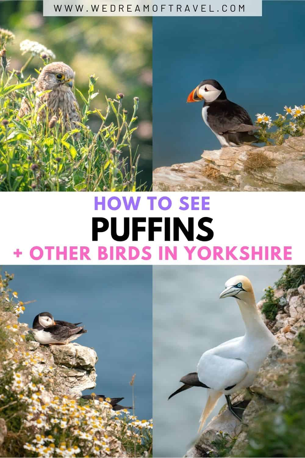 Each year puffins return to the British Isles to nest.  These iconic, charismatic birds are a pleasure to watch. Discover everything you need to know about seeing puffins in Yorkshire.