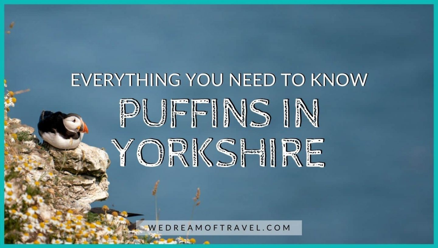 Everything you need to know about puffins in Yorkshire blog cover image.  Text overlaying and image of a puffin sat at the edge of a cliff surrounded by daisies.