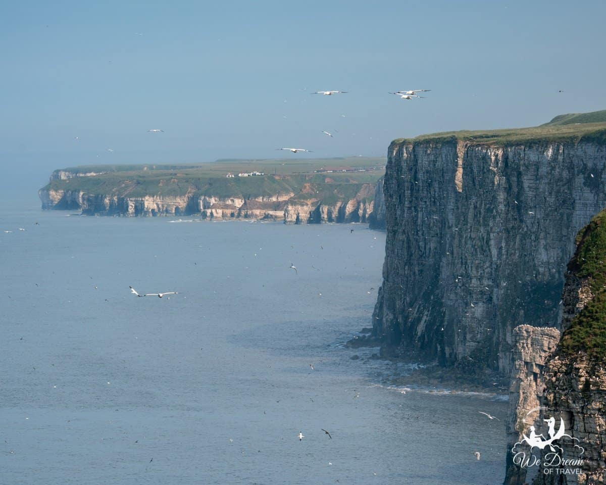 View of the Yorkshire Cliffs from Bartlett Nab Viewpoint RSPB Bempton