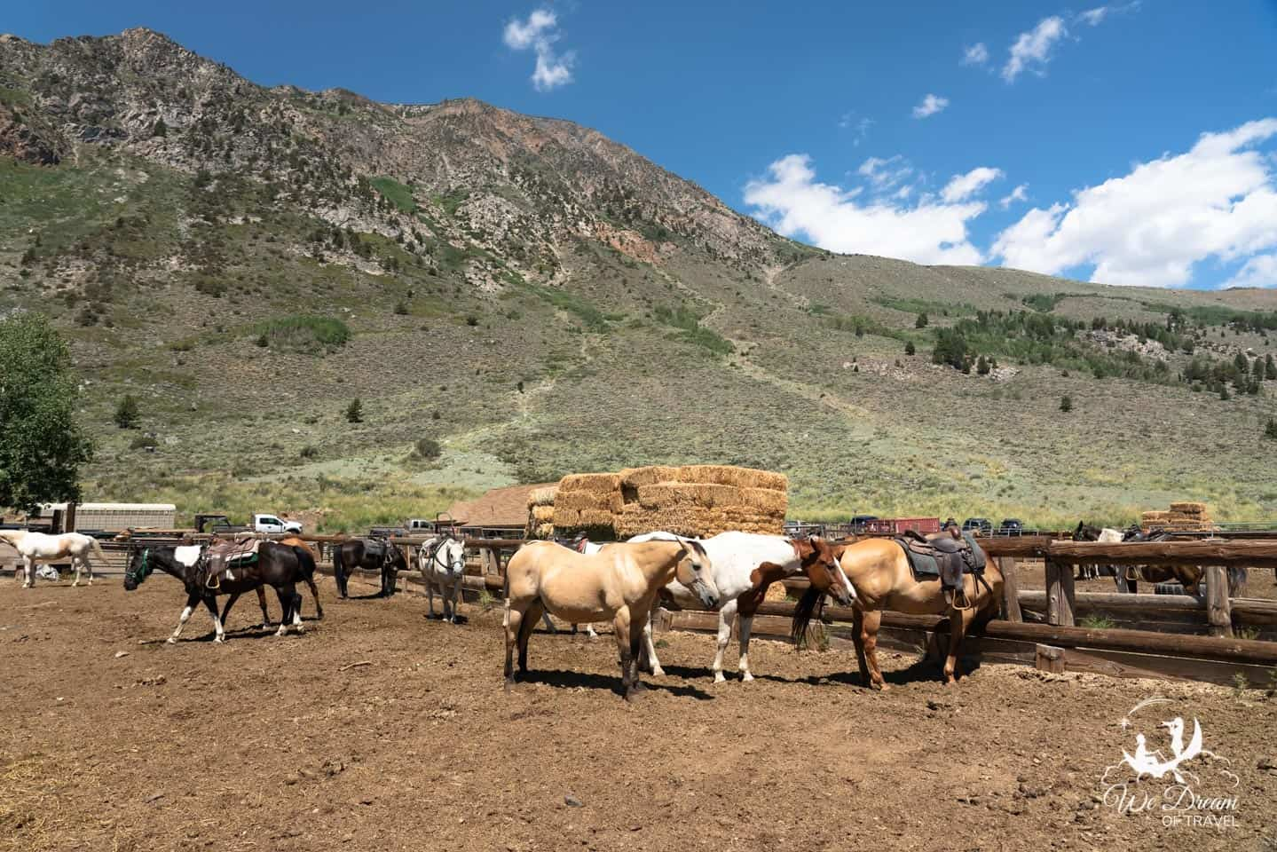 Horses at Frontier Pack Train wait to be booked for an adventure through the backcountry of the Eastern Sierras.
