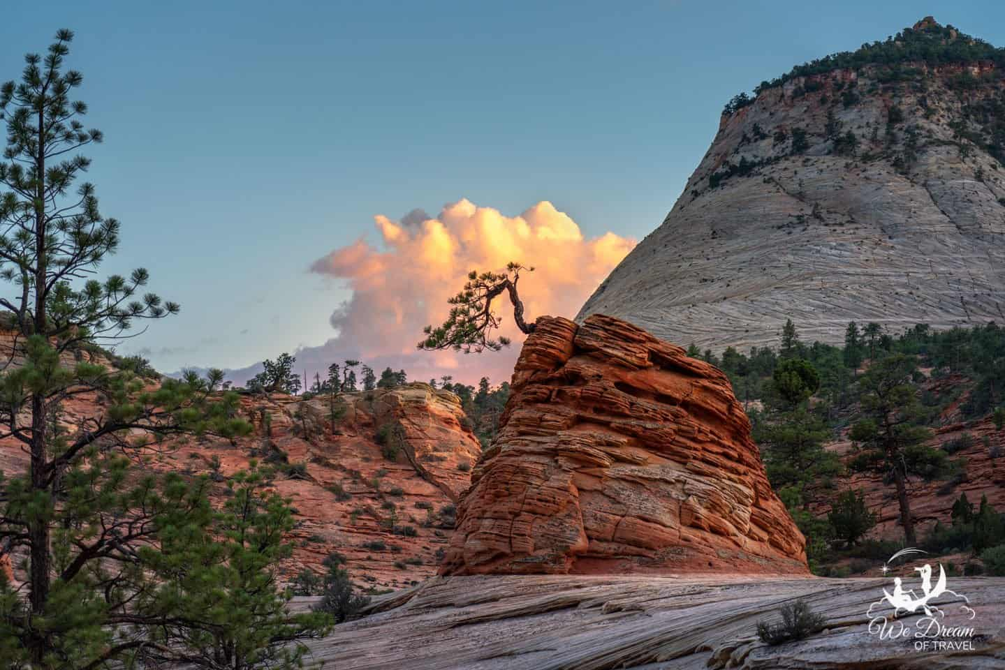 The Little Lonely Tree is a hidden gem on the journey from Bryce Canyon to Zion